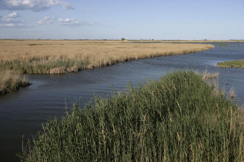 El Delta del Ebro se hunde 0,3 centímetros cada año