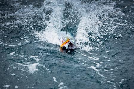 El grave estado de los Océanos según la WWF