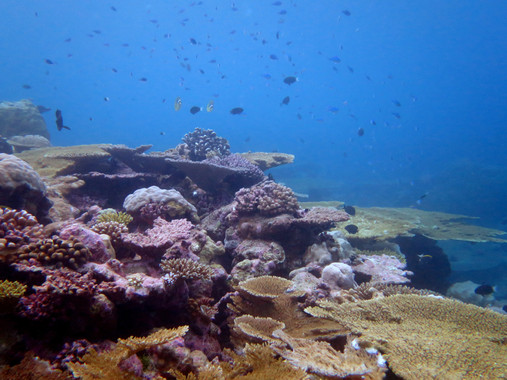 El aumento de la temperatura del agua pone en peligro a los océanos