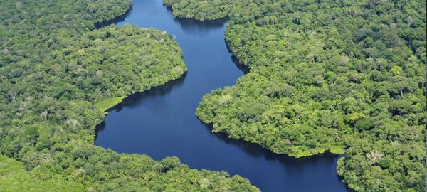 15 mil especies de árboles del Amazonas en peligro de extinción