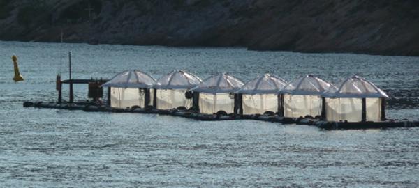 Las bacterias marinas del Mediterráneo se adaptan a la falta de fósforo