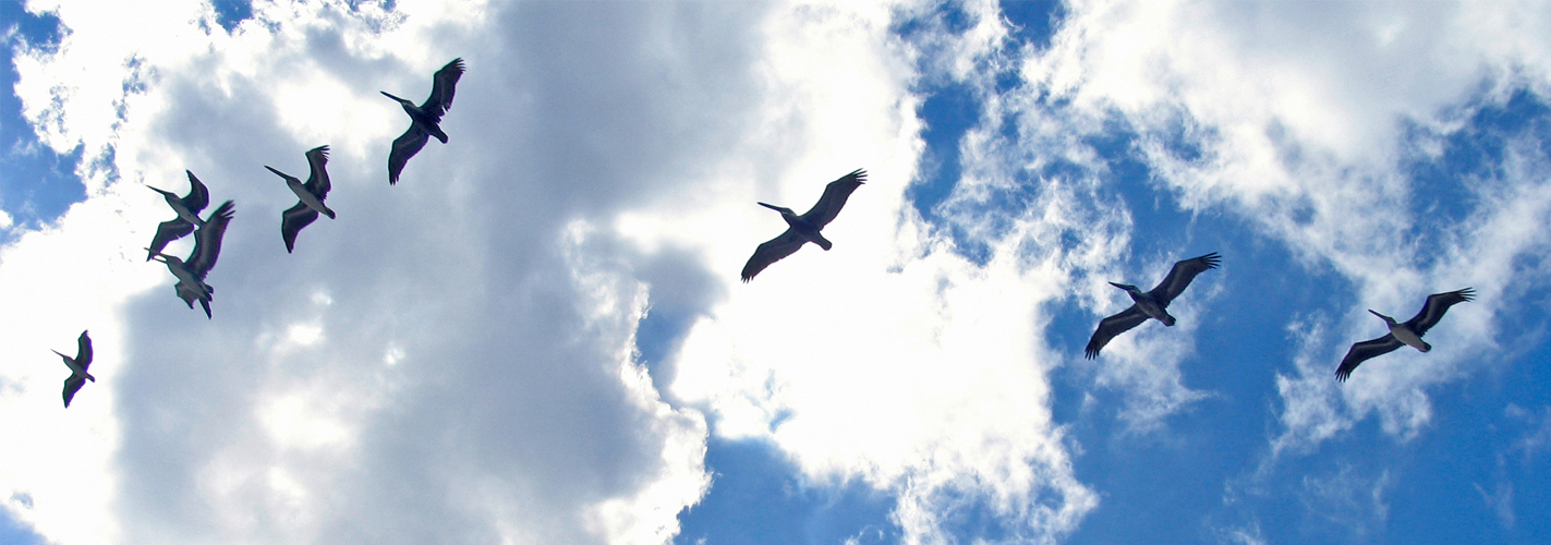 La costa de Extremadura acoge 80.000 aves marinas