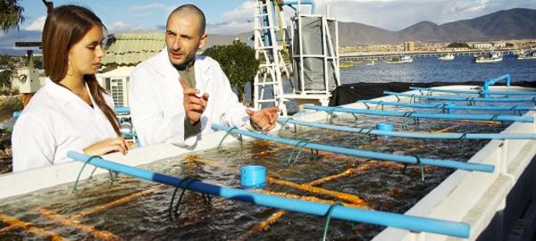 La Universidad Católica del Norte se adjudica siete proyectos relacionados con las ciencias del mar