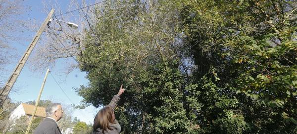 Las ramas de tres árboles provocan cortes de luz en Narón