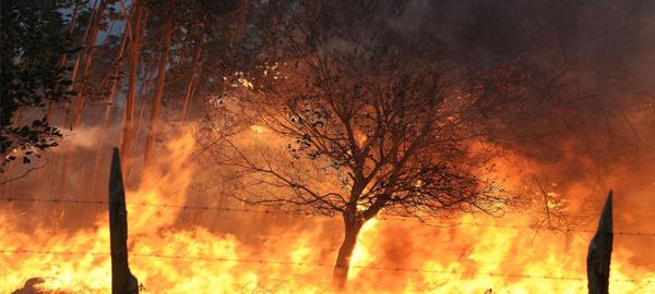 Los efectos para el medio ambiente de los incendios del norte