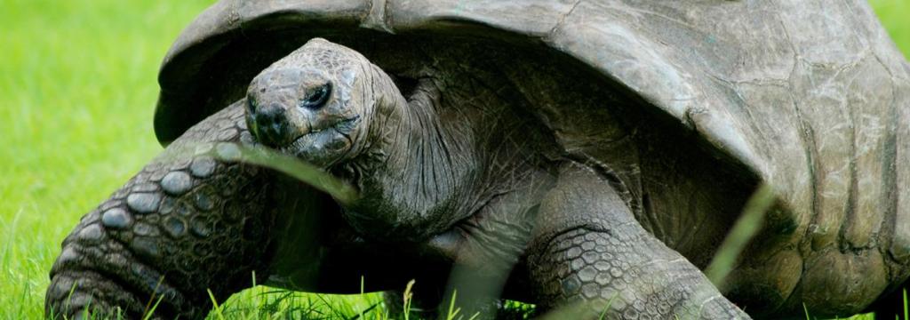 Éste es Jonathan, el animal terrestre más viejo del planeta