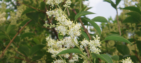 25.000 ejemplares de flora autóctona en los humedales manchegos