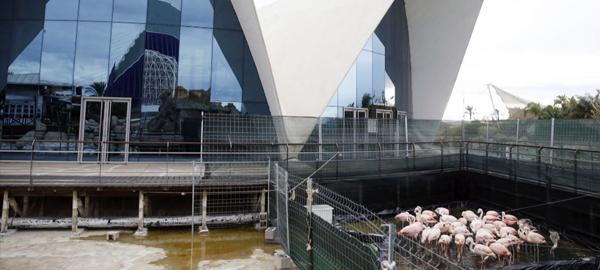 Avanqua invertirá 9 millones de euros en Oceanogràfic