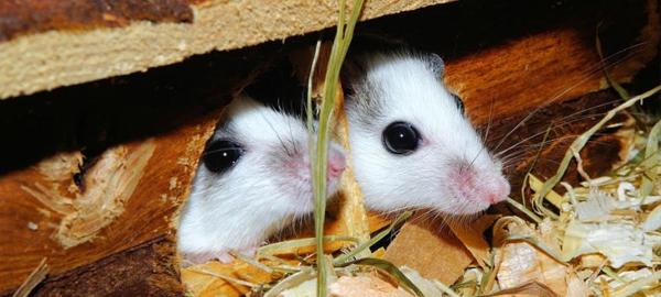 El cambio climático afecta a la alimentación de los animales herbívoros
