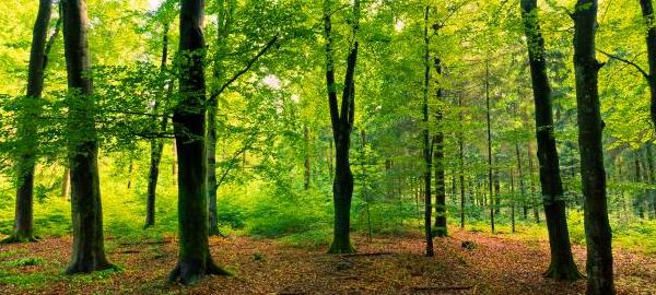 El papel de los bosques se fortalece en la lucha contra el cambio climático