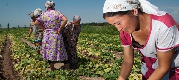 La FAO presenta un libro a favor de la agricultura sostenible