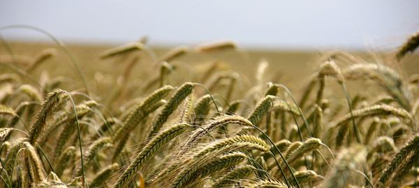 La agricultura detuvo el calentamiento global hace siete mil años