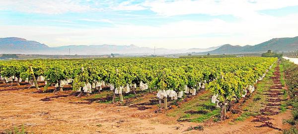 La falta de agua hace peligrar las exportaciones agrícolas