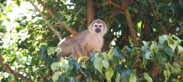La caza de animales en el Amazonas aumentará el problema del calentamiento global