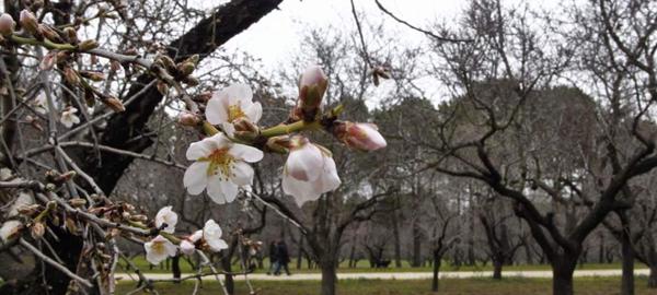Los efectos del cambio climático empiezan a ser visibles en la fauna y la flora