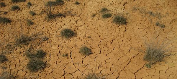 Se crea una comisión de seguimiento para la sequía agrícola