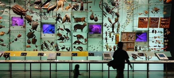 Todo lo que tienes que saber sobre biodiversidad