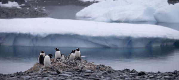150.000 pingüinos mueren en la Antártida a causa de un iceberg