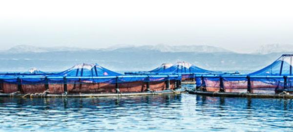 AquaSmart lanza la primera herramienta Big Data para la gestión de granjas marinas