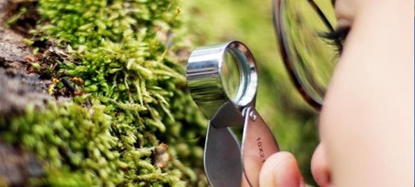 Científicos chilenos trabajan en la creación de árboles resistentes al cambio climático