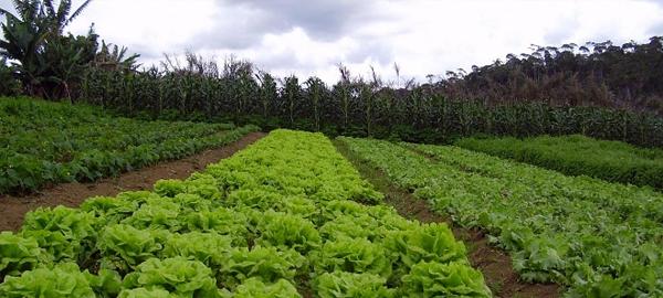 Descubre la agricultura agroecológica