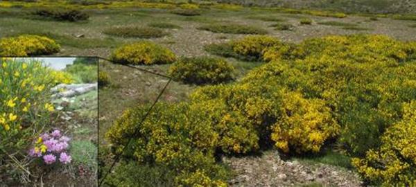 El cambio climático dificulta la polinización de la flora de la Sierra de Guadarrama