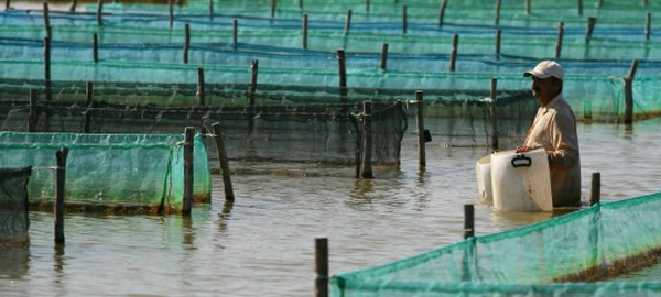 La FAO apuesta por la sostenibilidad