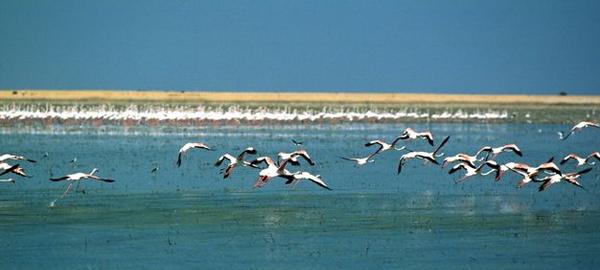 Los humedales son el hábitat vital del 40% de las aves que invernan en el Mediterráneo