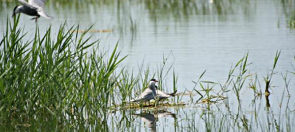 SUEZ Water Spain apoya la iniciativa del Ministerio Española Empresa y Biodiversidad