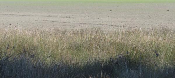 WWF pide medidas urgentes para proteger Doñana de los efectos del cambio climático
