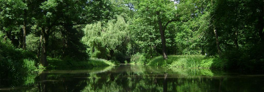La FAO busca impulsar el papel de los bosques para mejorar la calidad del agua