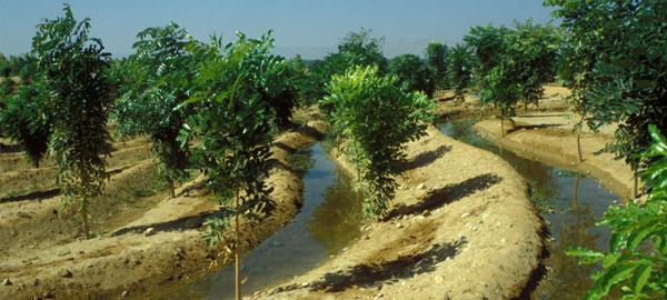 Las cuencas y los humedales forestales proporcionan un 75% de los recursos mundiales de agua dulce