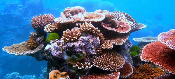 Los corales de todo el mundo, en peligro por el calentamiento global