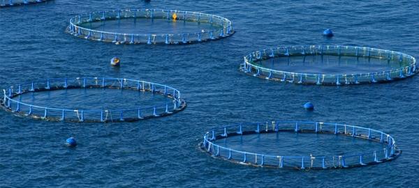 Se inicia un proyecto para fomentar el crecimiento sustentable de la acuicultura europea