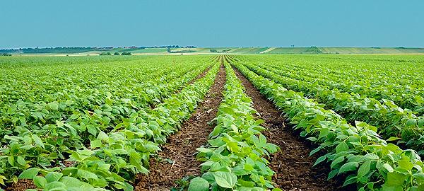 Valencia quiere reutilizar las aguas residuales para la agricultura