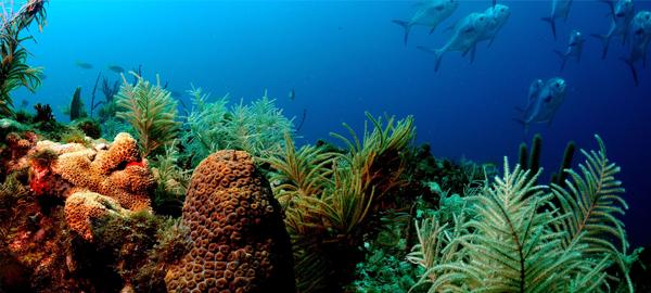 Casi la mitad del coral de la gran barrera ya está muerto