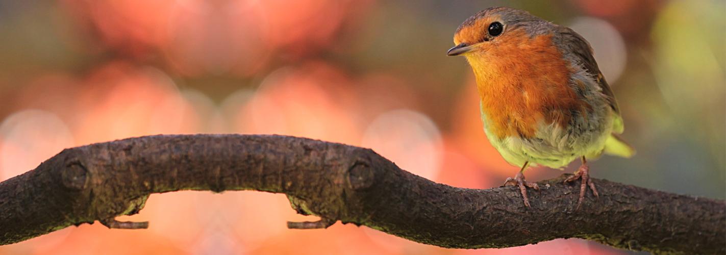Descubren que el cambio climático perjudica a algunas aves pero beneficia a otras