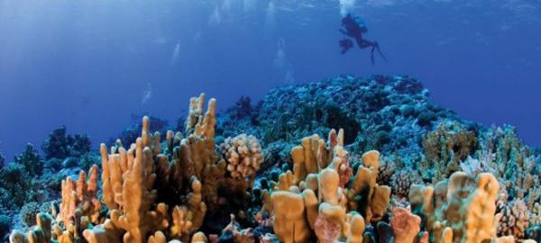 El Ministerio de Medio Ambiente clasifica los ecosistemas marinos