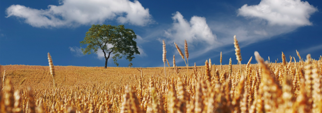 El cambio climático pone en peligro la seguridad alimentaria mundial