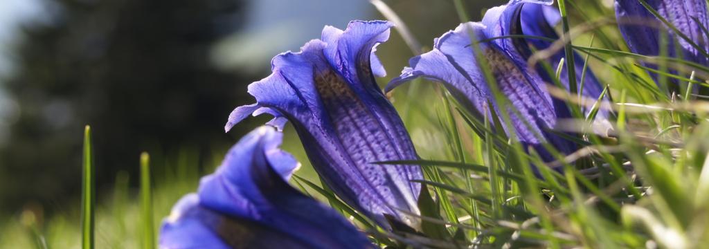 El clima y la flora de la península, ¿qué está pasando?