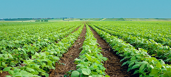La agricultura andaluza apuesta por la eficiencia del agua en los cultivos hortofrutícolas