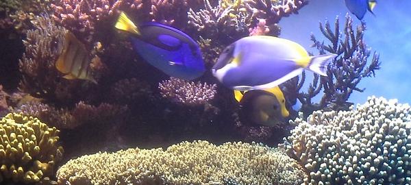 La biodiversidad de los arrecifes de coral, clave para la supervivencia de los ecosistemas