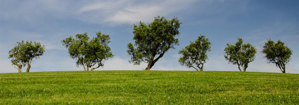 La educación ambiental, clave para el cuidado responsable del planeta