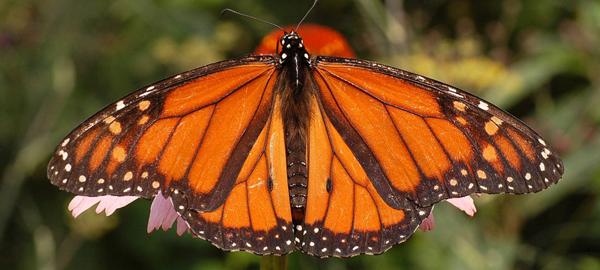 La importancia de proteger la biodiversidad