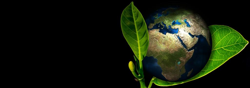 La tierra cada vez es más verde gracias al CO2