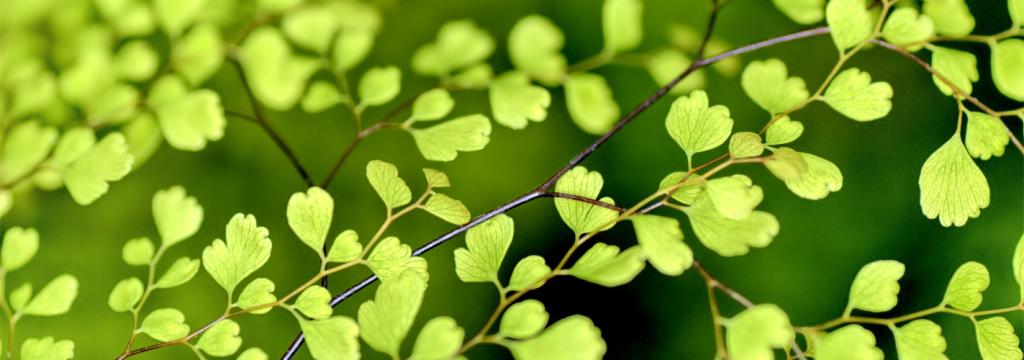 Las plagas ponen en peligro las plantas vitales para la alimentación humana
