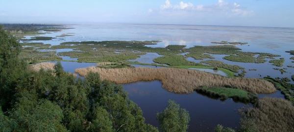 Medirán la recarga natural de los acuíferos de Doñana