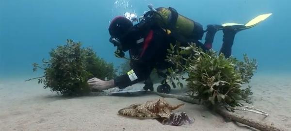 Se inicia un proyecto para recuperar las poblaciones de sepia y calamar