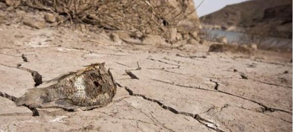 Un estudio revela que en 40 años Canarias tendrá menos agua dulce
