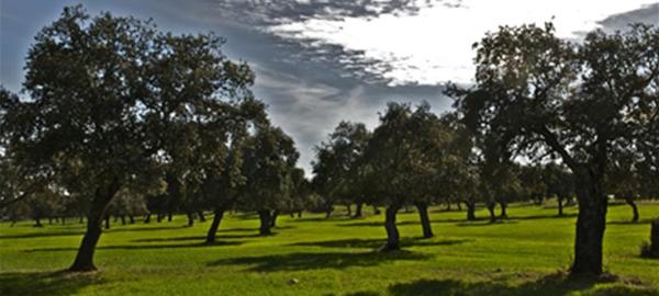 Andalucía apuesta por la biodiversidad
